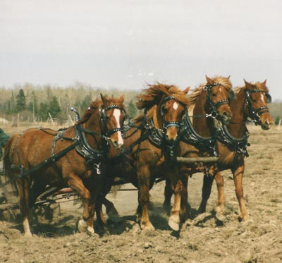 Ploughing - credit Pauli Craft
